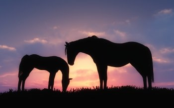 Dierenrijk - Paard Wallpapers and Backgrounds ID : 344794