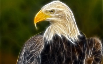 Animal - Eagle Wallpapers and Backgrounds ID : 345401