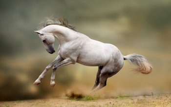 Animal - Horse Wallpapers and Backgrounds ID : 346277