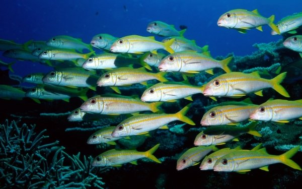 Animal Fish Fishes Underwater HD Wallpaper | Background Image