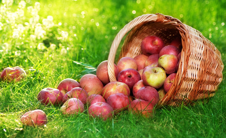 Image result for apple fruits wallpaper hd