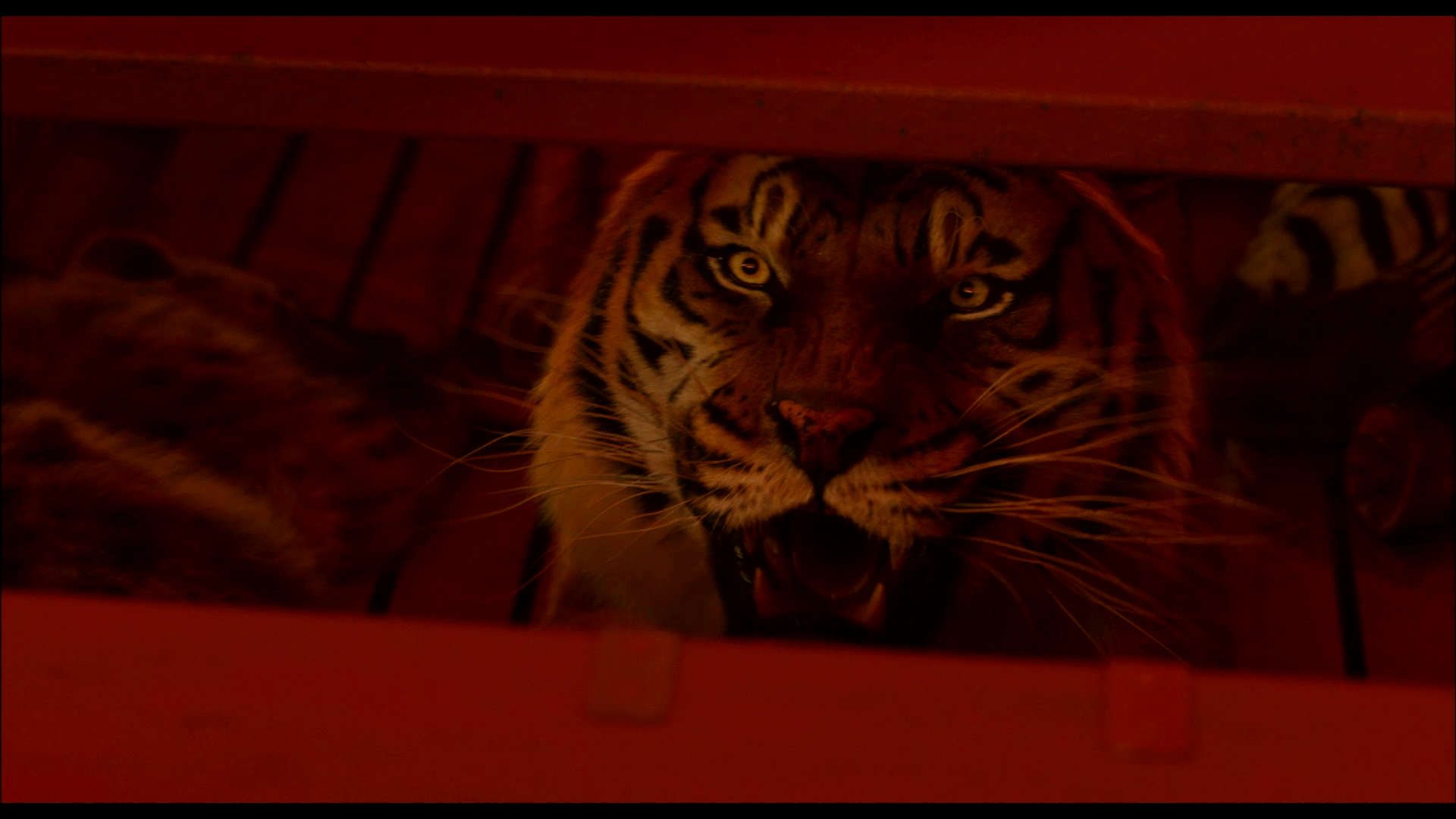 life of pi background Insurance fraud investigations protect you from fraudulent claims use a private investigator to prevent your premiums from rising  life insurance.
