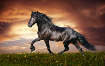 Animal - Horse Wallpapers and Backgrounds ID : 348114