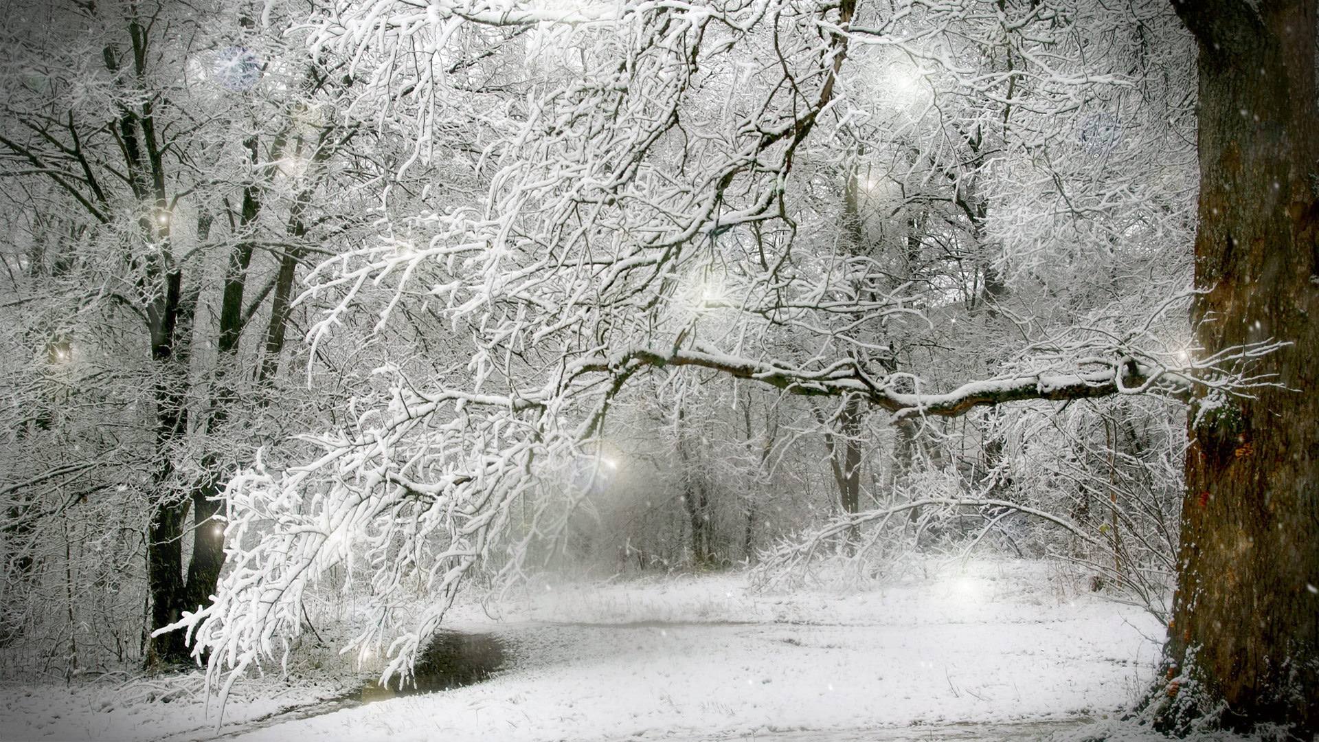 Winter full hd wallpaper and background image 1920x1080 id349371 earth winter earth forest tree snow wallpaper voltagebd Image collections
