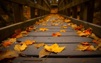Photography - Autumn Wallpapers and Backgrounds ID : 349608