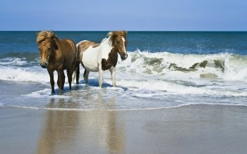 Animalia - Caballo Wallpapers and Backgrounds ID : 349759