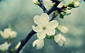 Earth - Blossom Wallpapers and Backgrounds ID : 350432
