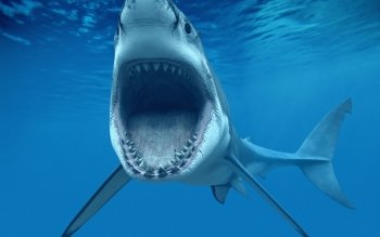 Animal - Shark Wallpapers and Backgrounds ID : 350482