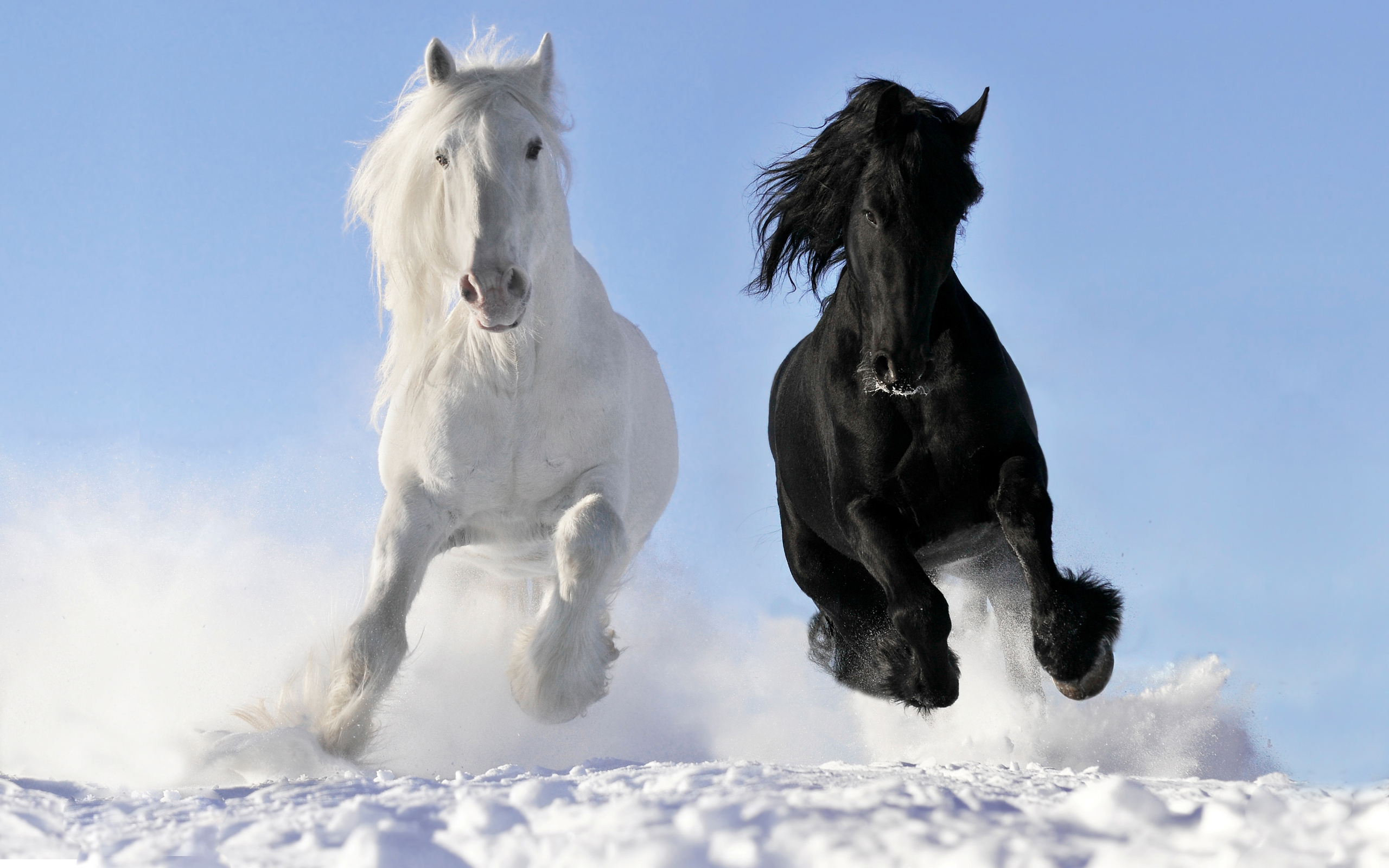1432 Horse Hd Wallpapers Background Images Wallpaper Abyss