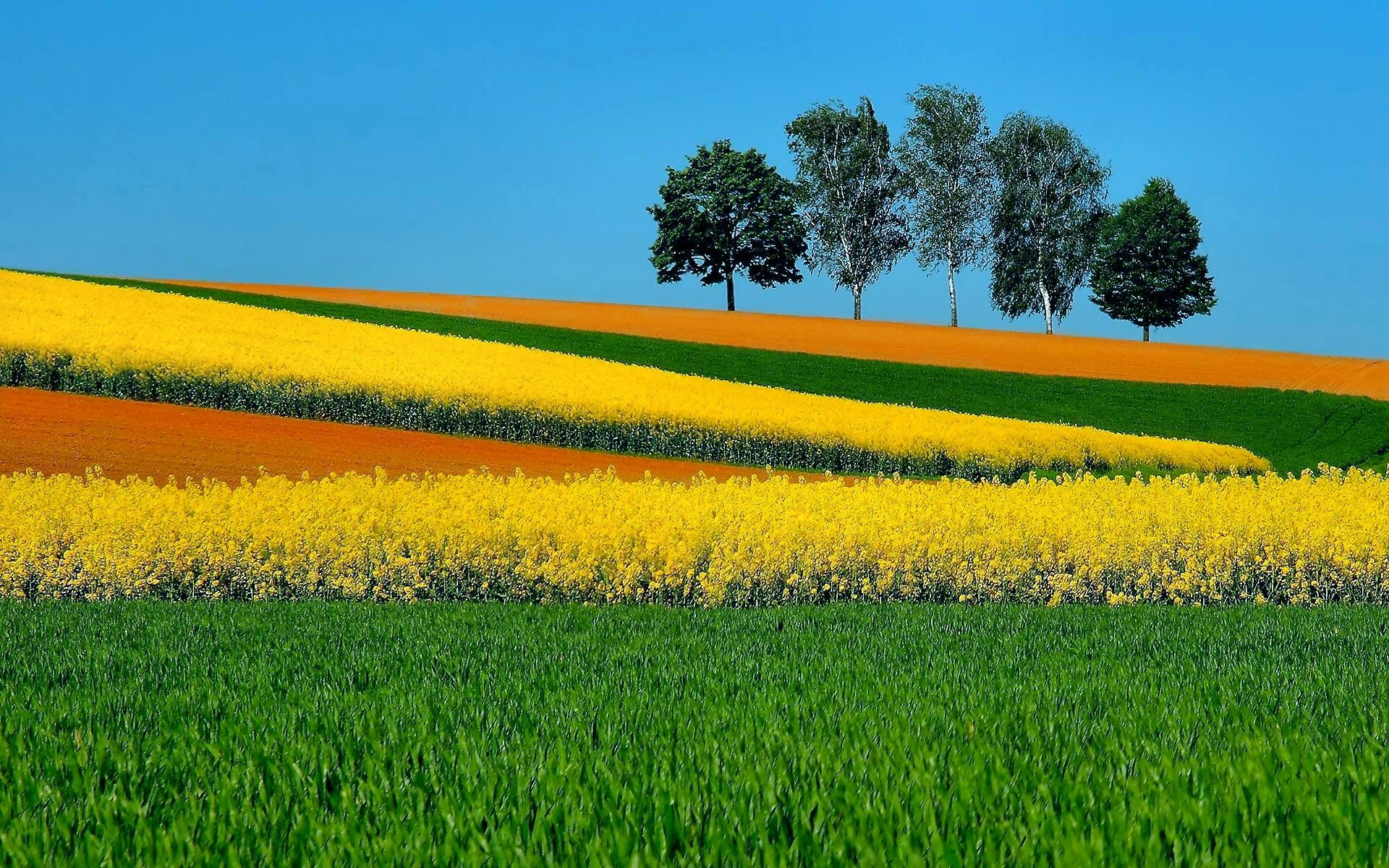 Photography - Landscape  Horizon Tree Field Grass Green Yellow Sunny Wallpaper