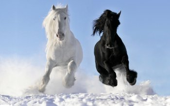 Animal - Horse Wallpapers and Backgrounds ID : 351442