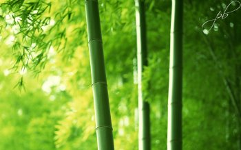 Tierra - Bamboo Wallpapers and Backgrounds ID : 352709