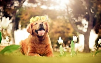 Animal - Dog Wallpapers and Backgrounds ID : 353131