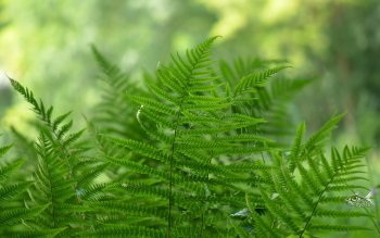 Earth - Fern Wallpapers and Backgrounds ID : 354180