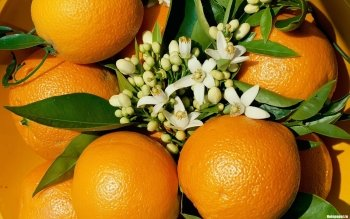Food - Orange Wallpapers and Backgrounds ID : 354415