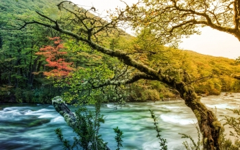 Earth - River Wallpapers and Backgrounds ID : 355003