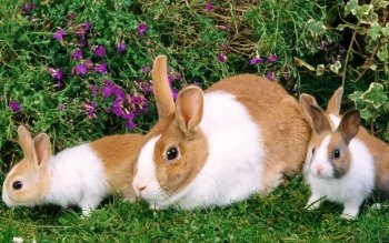 Animal - Rabbit Wallpapers and Backgrounds ID : 355664