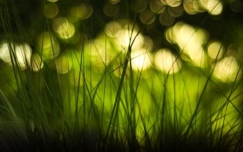 Earth - Grass Wallpapers and Backgrounds ID : 355852