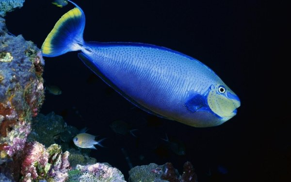 Animal Fish Fishes Underwater Ocean Blue HD Wallpaper | Background Image