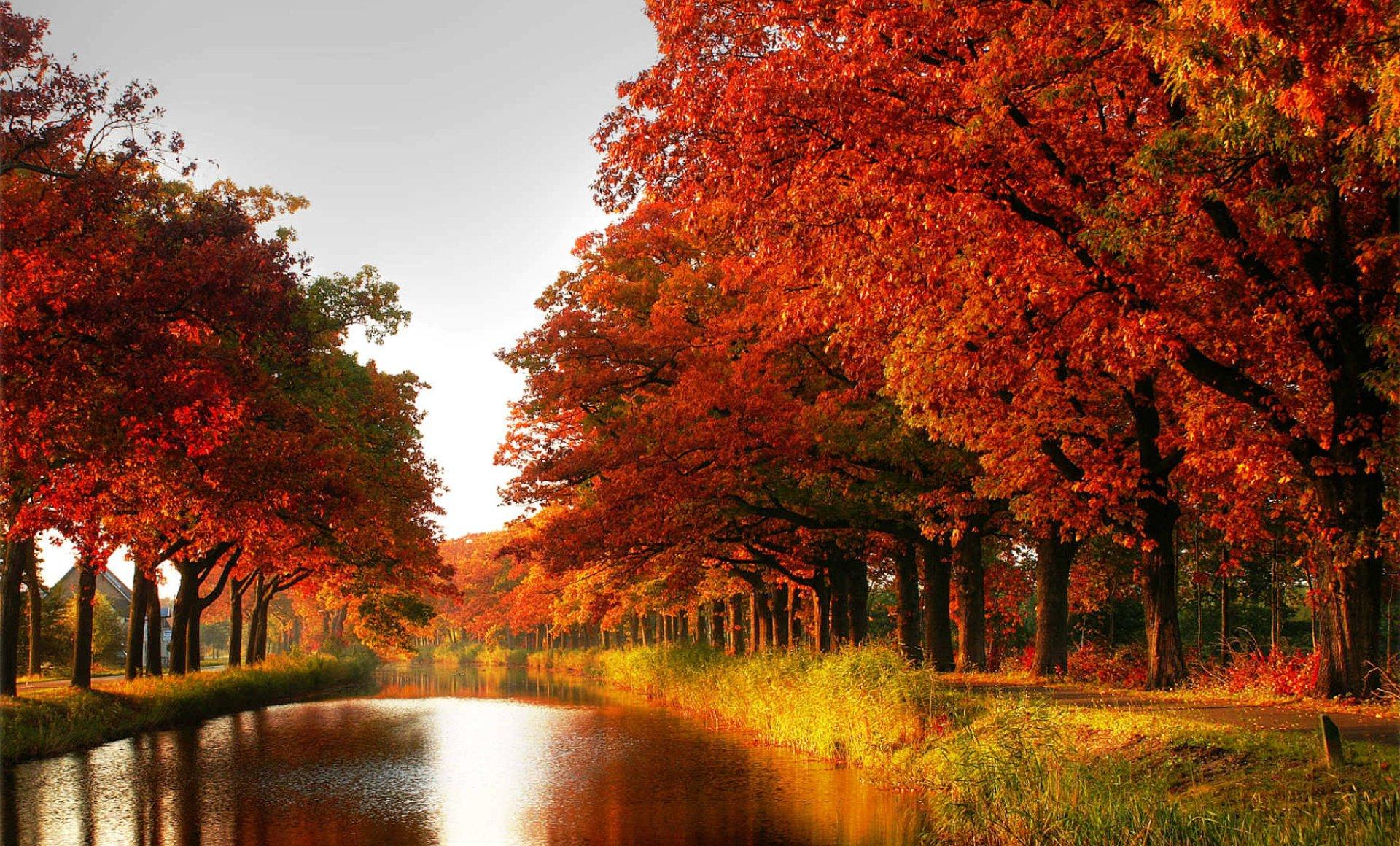 Earth - Fall  River Path Wallpaper