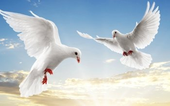 Animalia - Dove Wallpapers and Backgrounds ID : 356447