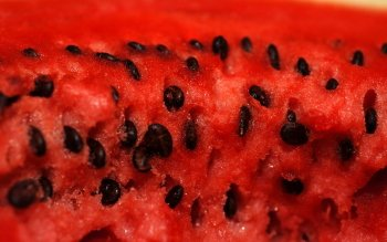 Food - Watermelon Wallpapers and Backgrounds ID : 357034