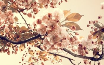 Earth - Blossom Wallpapers and Backgrounds ID : 357741