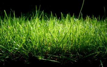 Earth - Grass Wallpapers and Backgrounds ID : 358084