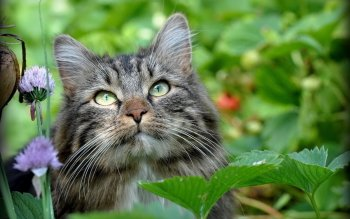Animal - Cat Wallpapers and Backgrounds ID : 358265