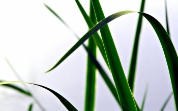 Earth - Grass Wallpapers and Backgrounds ID : 359859