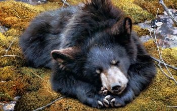 Animal - Bear Wallpapers and Backgrounds ID : 360810
