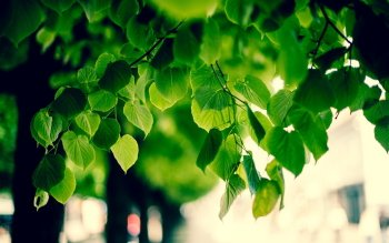 Earth - Leaf Wallpapers and Backgrounds ID : 361232