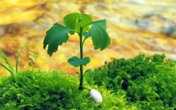 Earth - Plant Wallpapers and Backgrounds ID : 361265