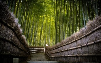 Tierra - Bamboo Wallpapers and Backgrounds ID : 362916