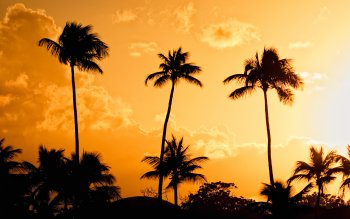 Earth - Palm Wallpapers and Backgrounds ID : 363534