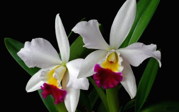 Wallpaper steine blumen  235 Orchidee HD Wallpapers | Hintergründe - Wallpaper Abyss