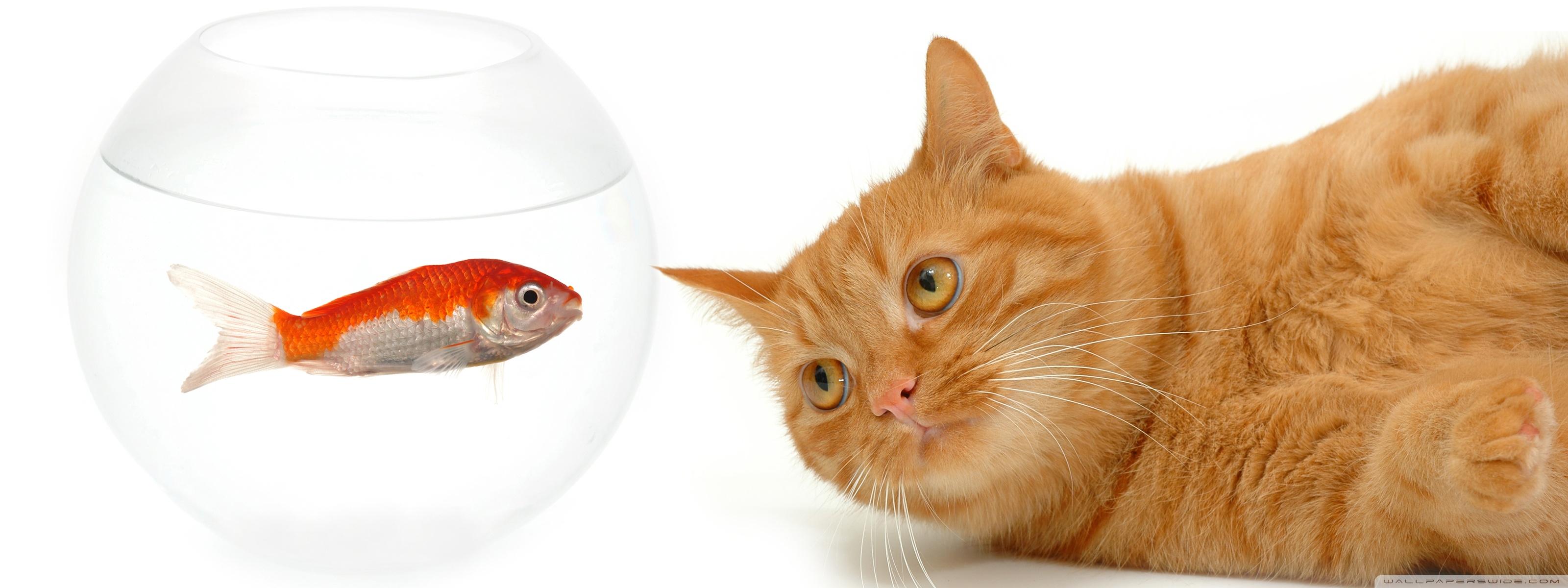 Cat Screen Meme