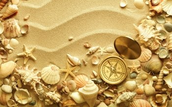Earth - Shell Wallpapers and Backgrounds ID : 365165