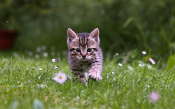 Animal - Cat Wallpapers and Backgrounds ID : 368703