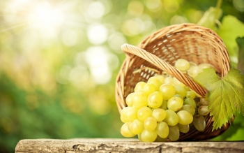 Food - Grapes Wallpapers and Backgrounds ID : 368763