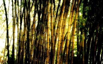 Tierra - Bamboo Wallpapers and Backgrounds ID : 372073