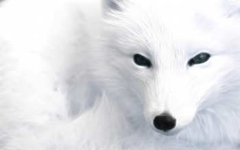 Animal - Arctic Fox Wallpapers and Backgrounds ID : 372694