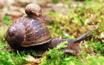 Animal - Snail Wallpapers and Backgrounds ID : 373015
