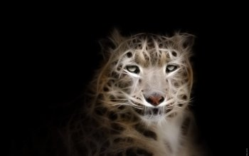 Animal - Snow Leopard Wallpapers and Backgrounds ID : 373181