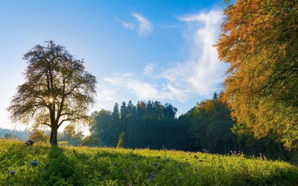 Earth Landscape Tree Switzerland Meadow Sky Flower HD Wallpaper | Background Image