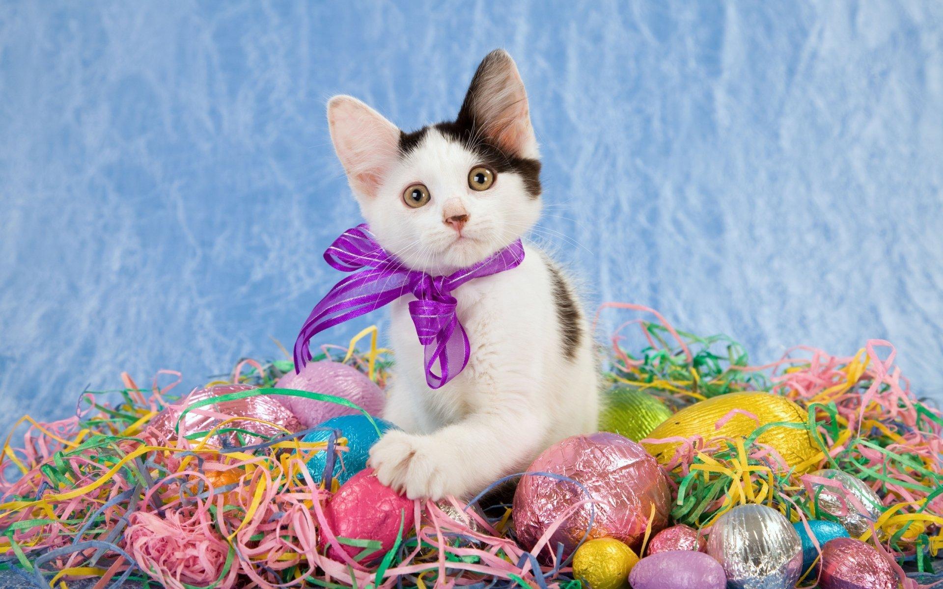 Animais - Gato  Kitten Páscoa Easter Egg Ovo Animais Baby Animal Papel de Parede