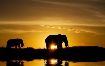 Animal - Elephant Wallpapers and Backgrounds ID : 377098