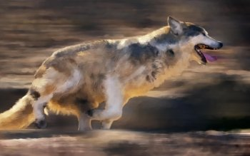 Dierenrijk - Wolf Wallpapers and Backgrounds ID : 377099