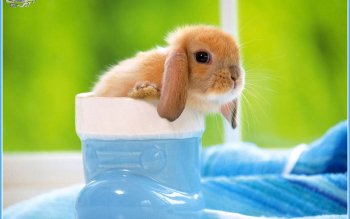 Animalia - Hare Wallpapers and Backgrounds ID : 379047