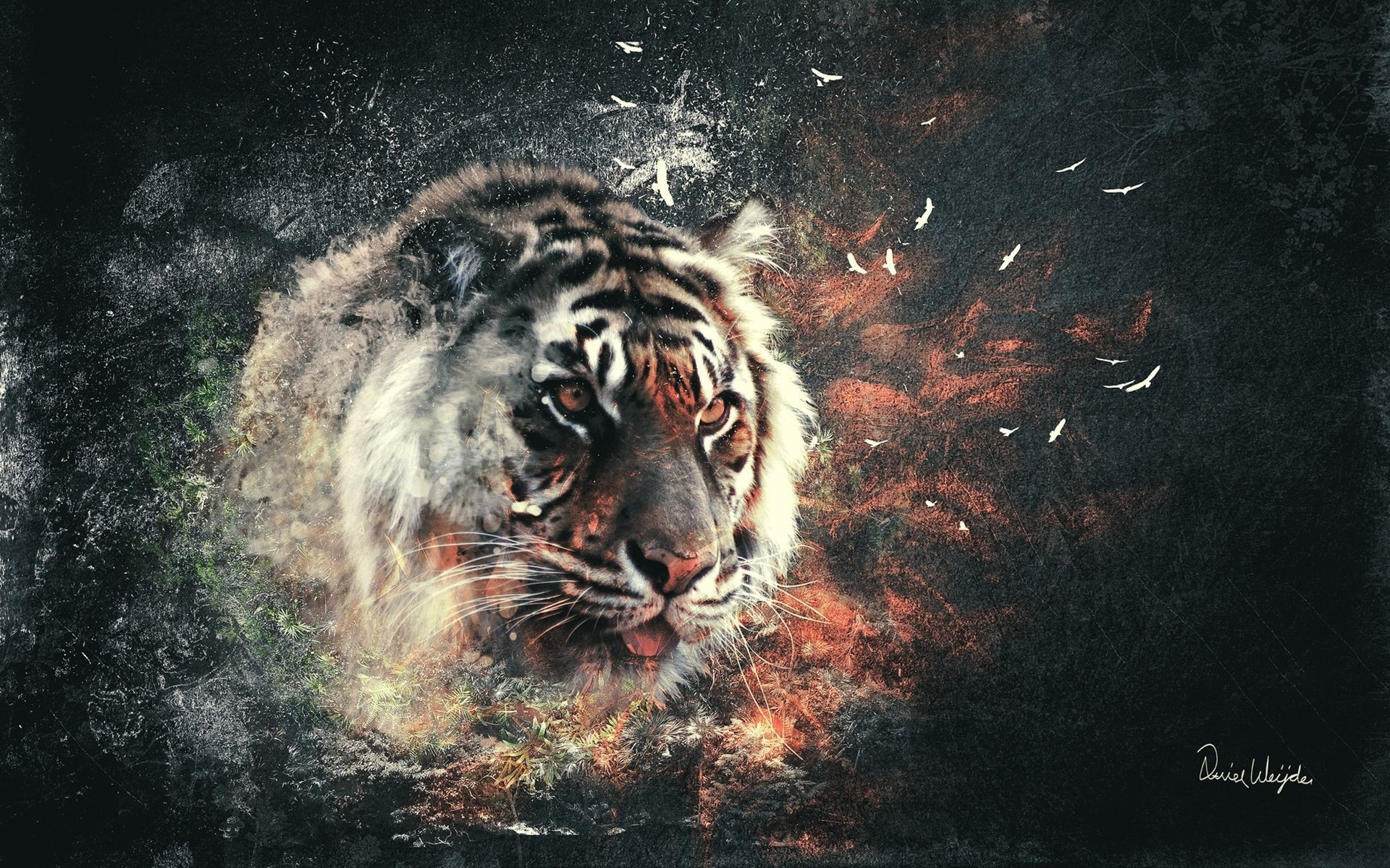 Tiger full hd wallpaper and background image 1920x1200 id380779 animal tiger wallpaper thecheapjerseys Gallery